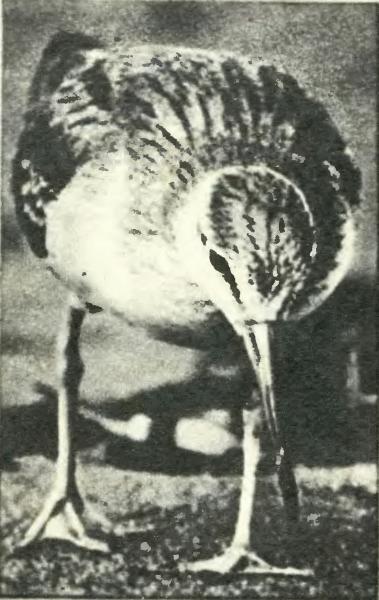 Камера фиксирует поведение птицы