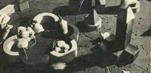 Кадр из фильма «Живое в неживом»